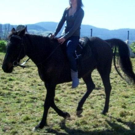 Bare Back Riding Pad
