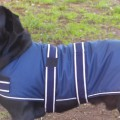 Dog Jacket Waterproof Large