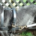 Dog Carting Harness Real Leather