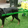 DOG PULLED CART YELLOW