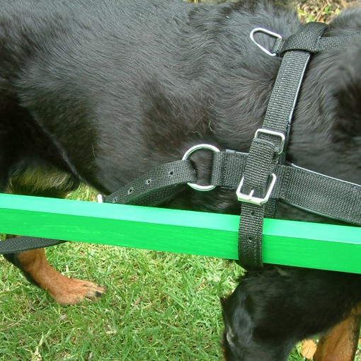 CARTING HARNESS PP