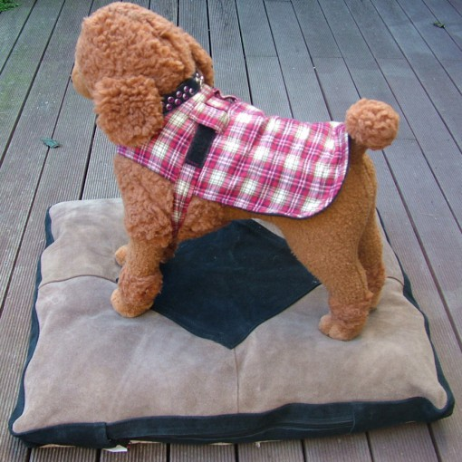 Dog Jacket Cotswool Small