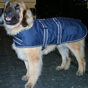 Dog Jacket Waterproof XXL