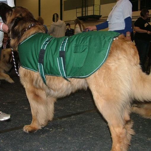 Dog Jacket Waterproof XXL