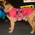 Dog Jacket Waterproof XL