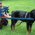 DOG PULLED CART