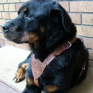 Dog Walking Harness Adjustable
