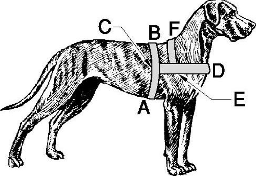 Dog Harness Carting Drafting Petlovers Nz Ltd