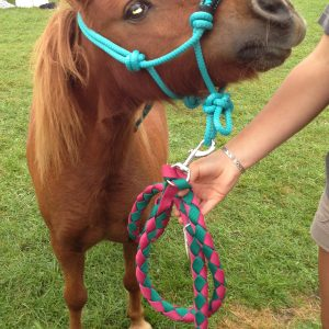 Horse Rope Halter Padded Nose Bit In Use