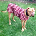 Dog Jacket Cotswool XL