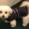 Dog Jacket Water Proof X Small 25