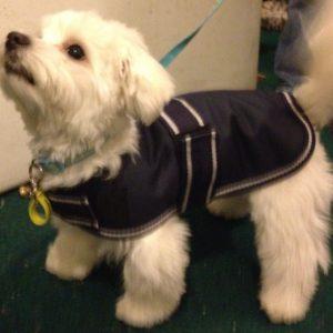 Dog Jacket Waterproof XS