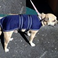 Dog Jacket Waterproof Xmed