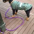 Dog Lead Multipurpose PP