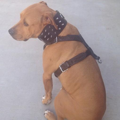Dog Collar 3 Inch