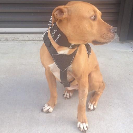 Dog Walking Harness Adjustable