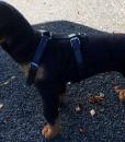 Dog Harness Tracking