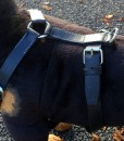Dog Harness Tracking