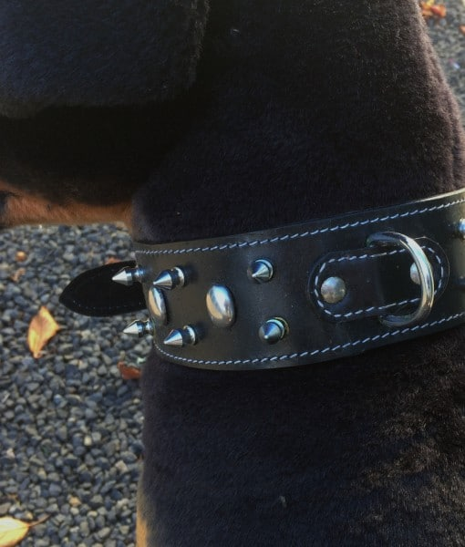 Dog Collar Spiked