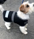Water Proof Dog Jacket 35cm