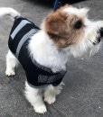 Water Proof Dog Jacket 35cm