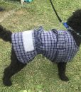 Cotwool Dog Jacket 35cm