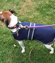 Dog Jacket Waterproof Small