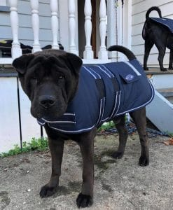 Water Proof Dog Jacket 55cm