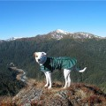 DOG JACKET WATER PROOF LARGE 65 GREEN