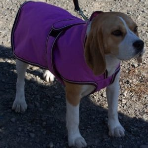 Dog Jacket Waterproof Hooded Med
