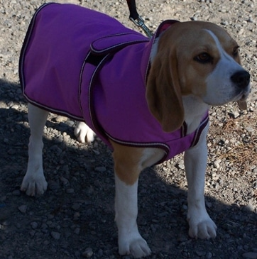 Dog Jacket Waterproof Hooded Medium