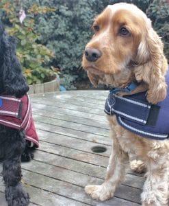 Dog Jacket Waterproof 45cm