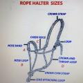 Halter Sizes