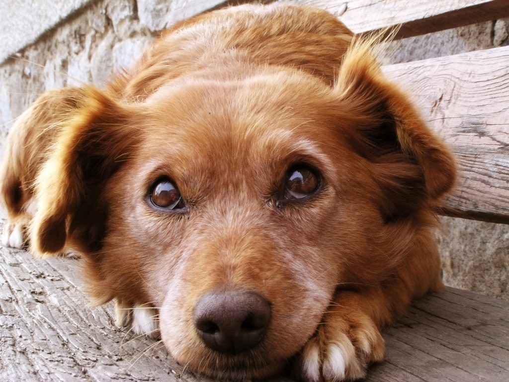 dog-how-to-select-your-new-best-friend-thinkstock99062463[1]