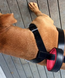 Dog Walking Harness Broached