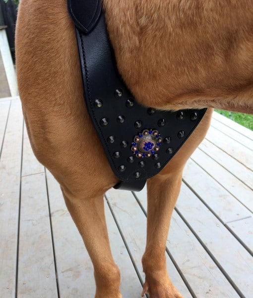 Dog Walking Harness with Attractive Broach Adorning On Dashing Chest Plate